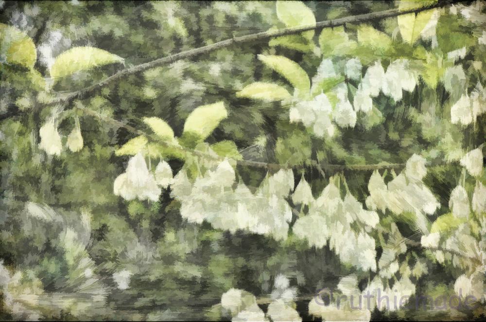 Texture Flower 6
