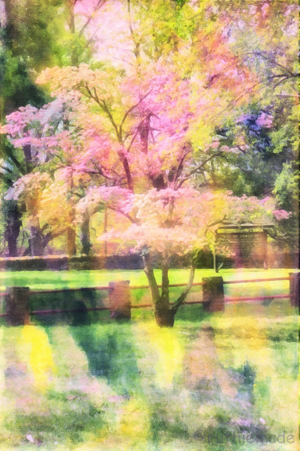 Textured Tree