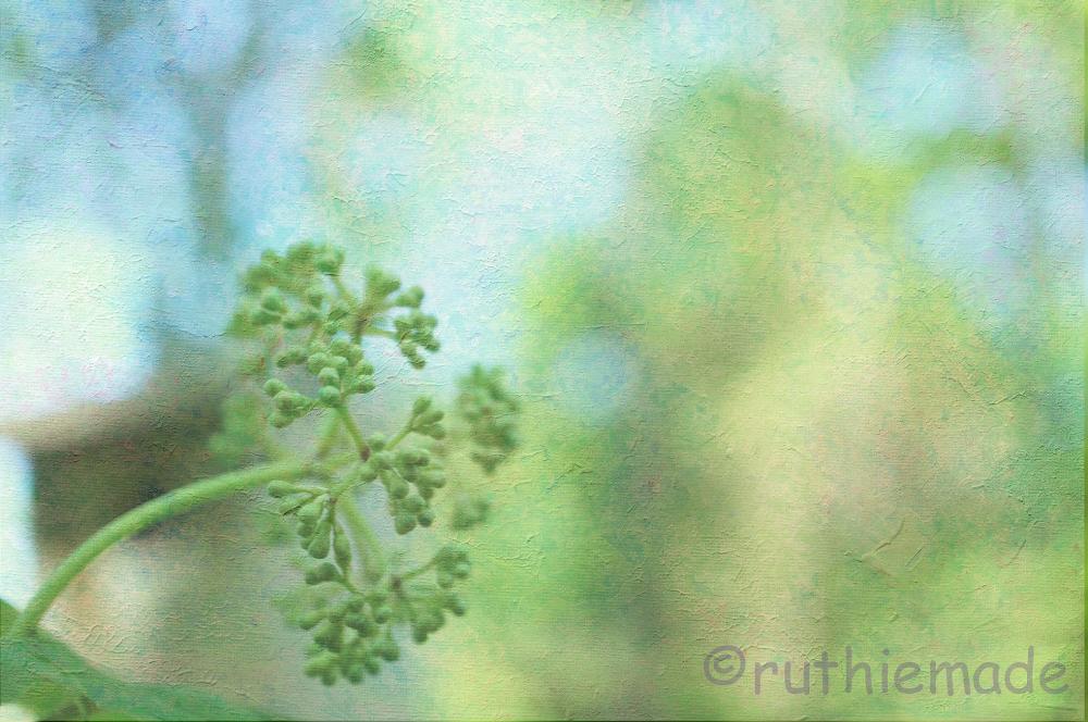 Texture Plant 14
