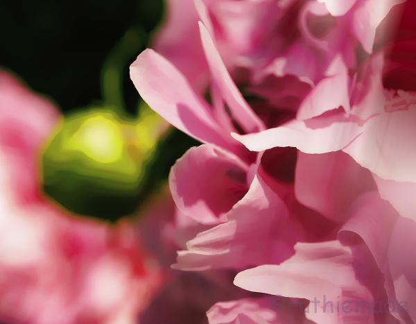 Texture Flower 20