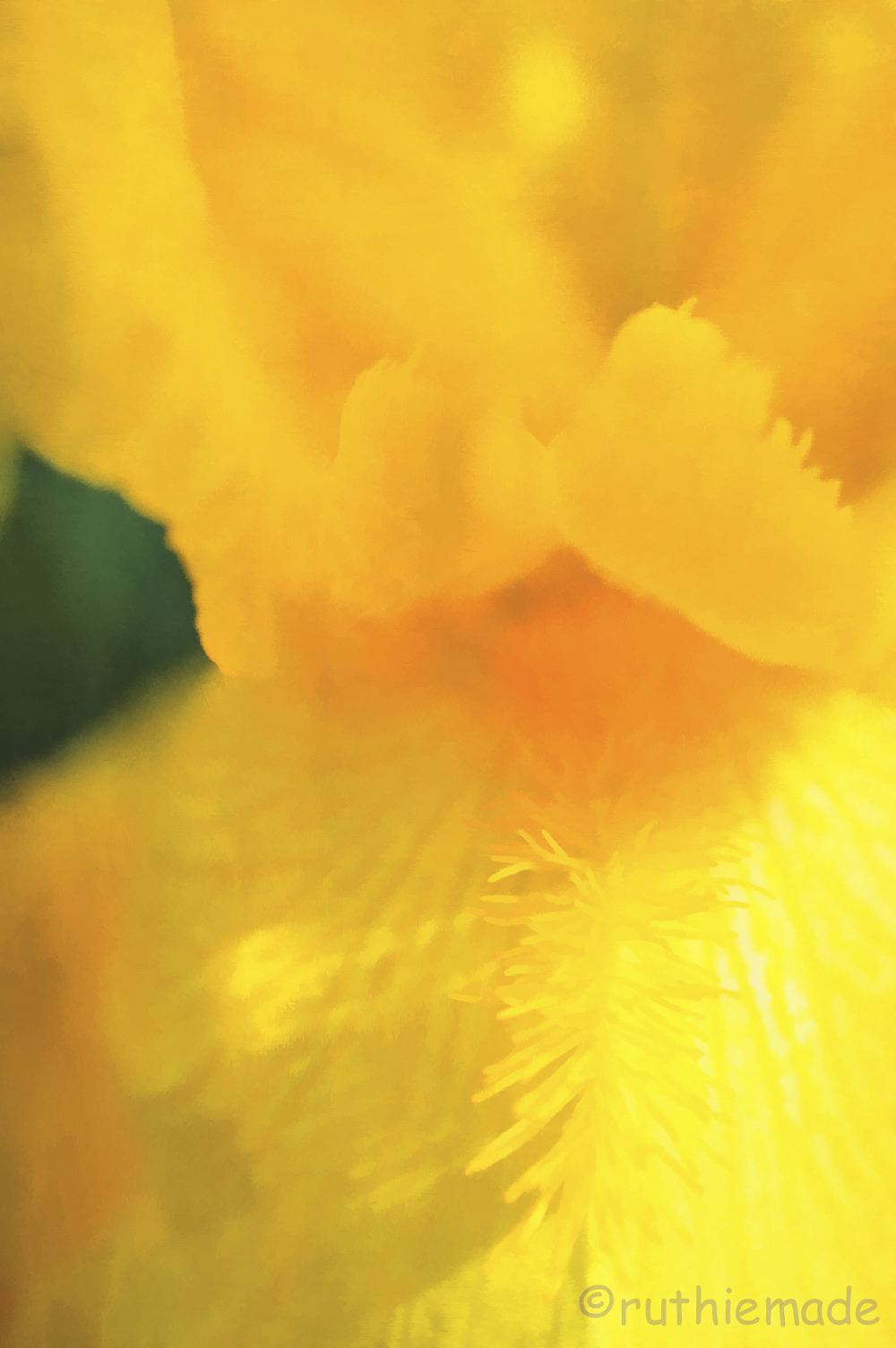 Texture Flower 21
