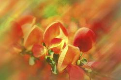 Texture Flower 23