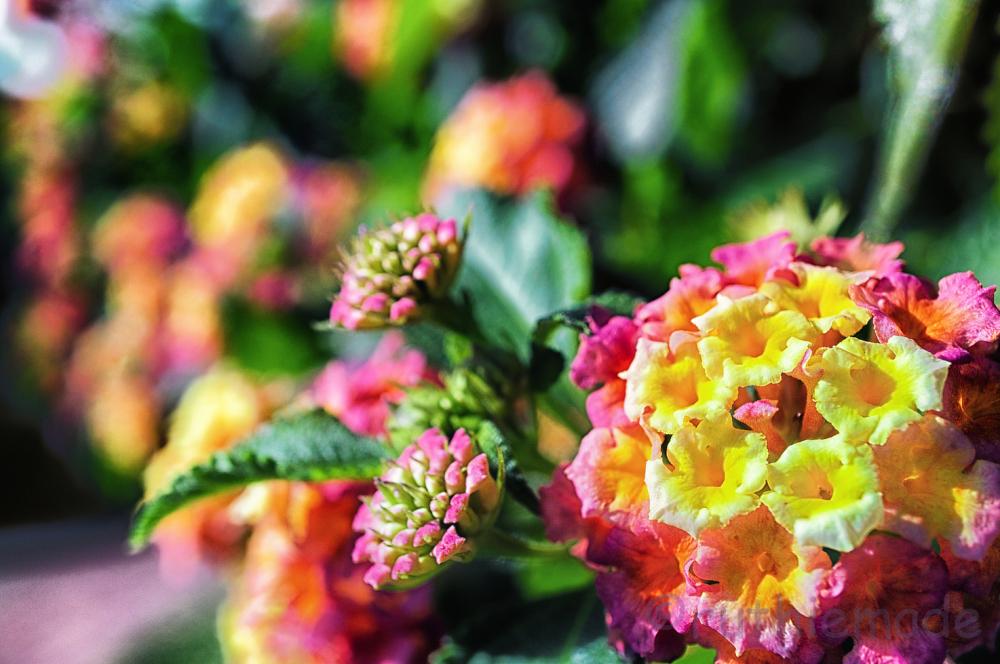Flower in Fall 1