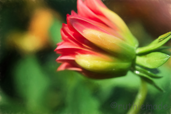 Fall Flower 2