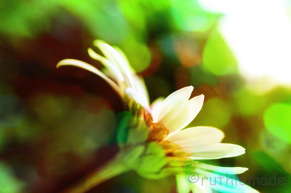Fall Flower 3