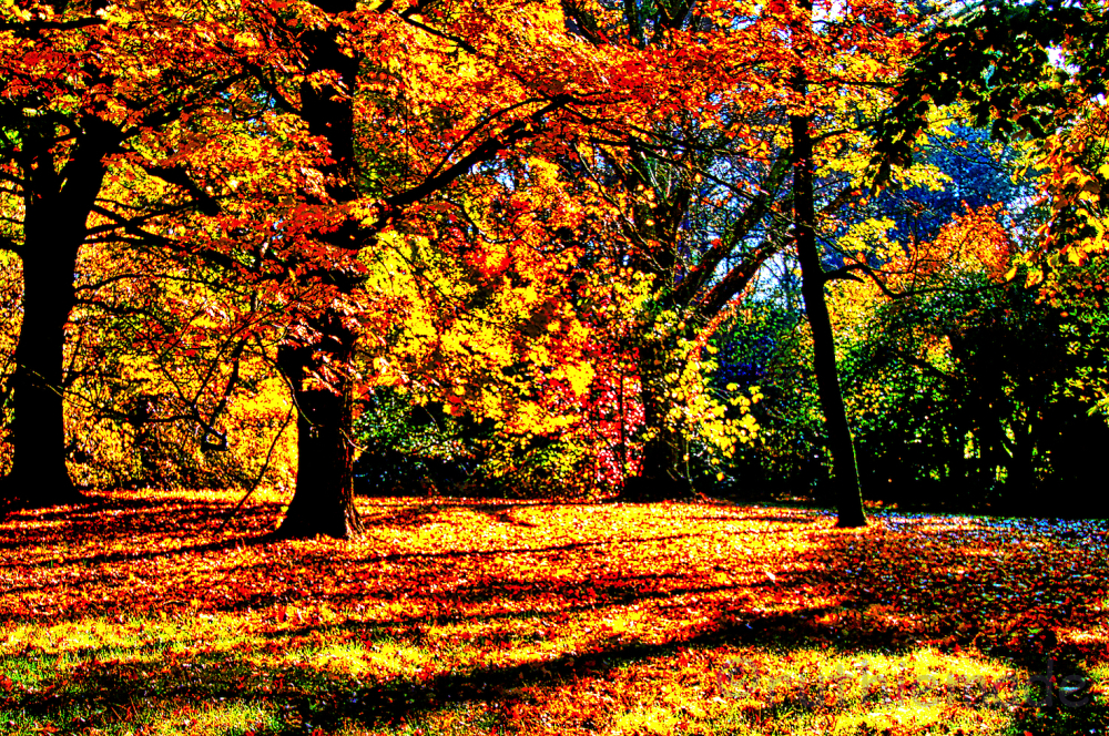 Fallling Leaves