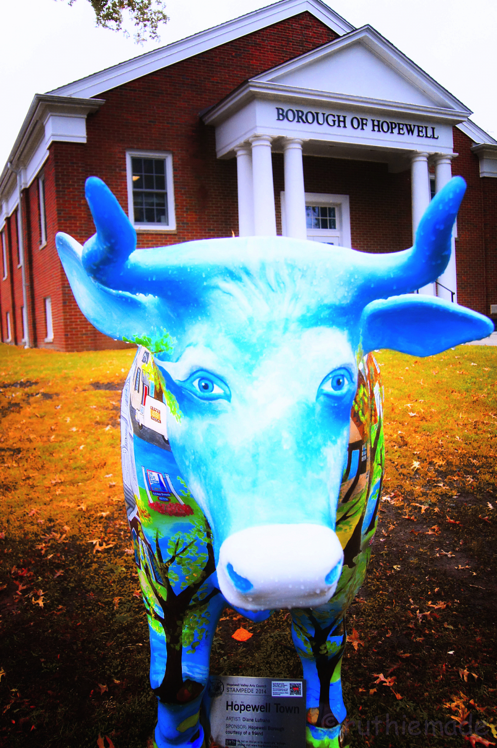 Hopewell Town Ox