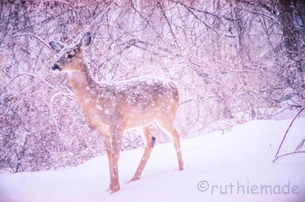 SNowstorm deer