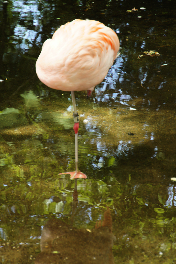 ST Headless Flamingo