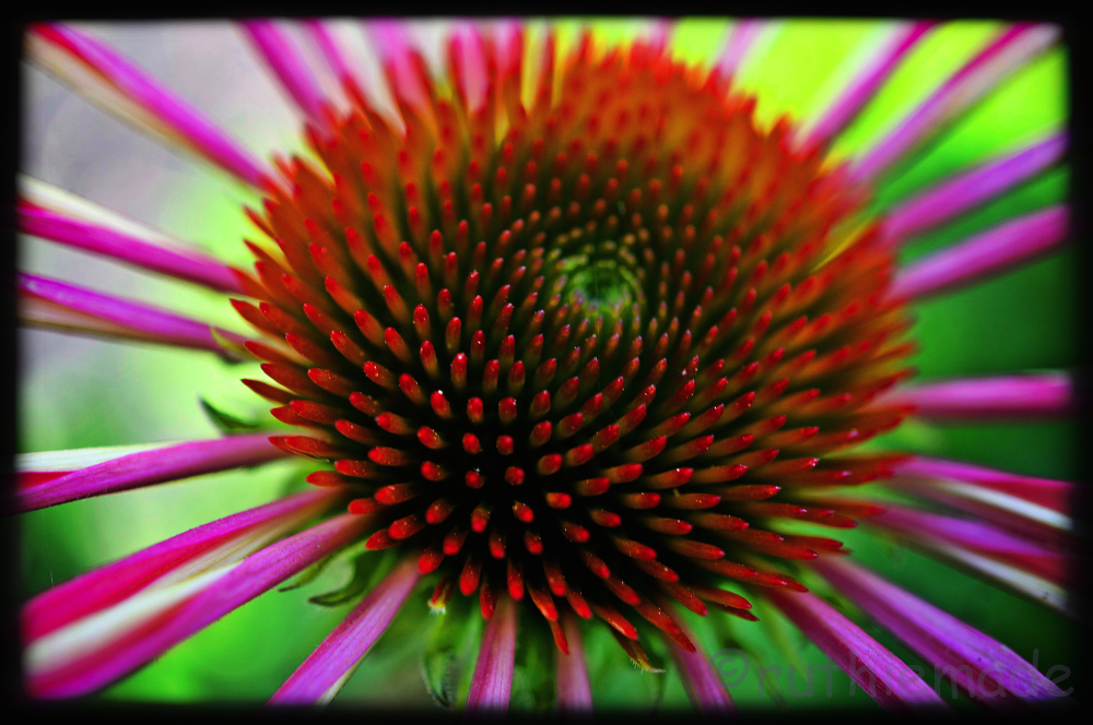Flower like the sun