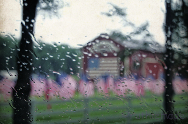 Tears for America