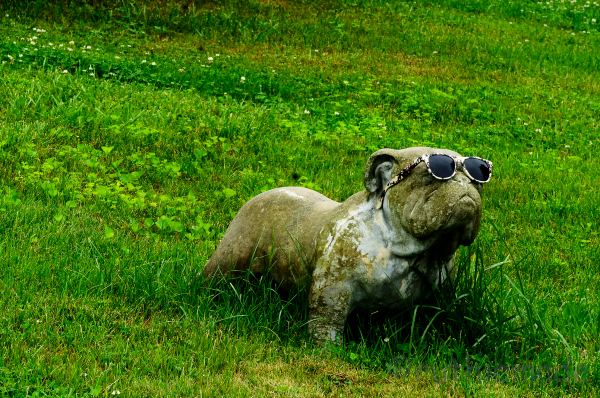 SToned Dog with SUnglasses