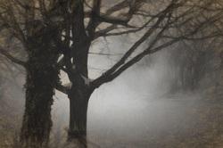 A Dark and Foggy NIght