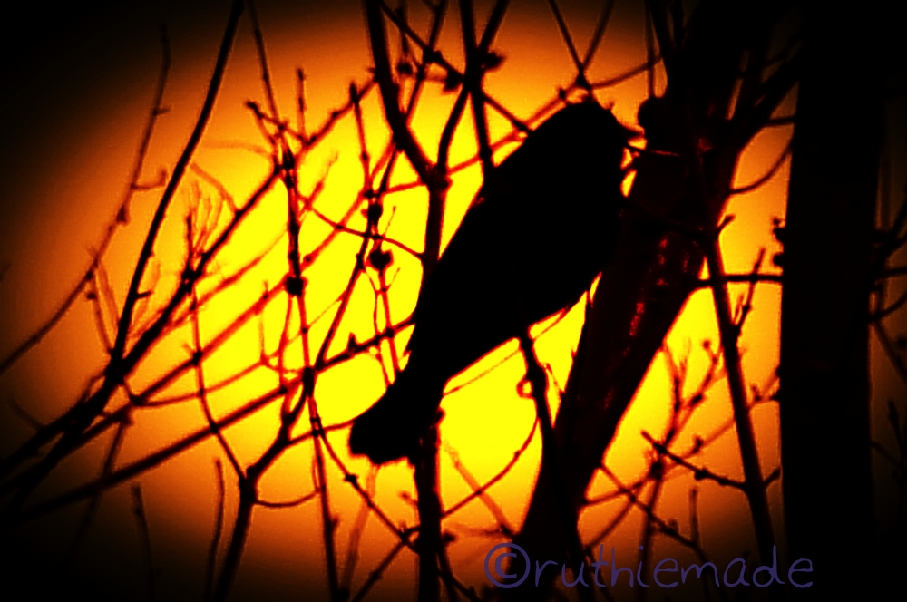 Bird in SIlhouette