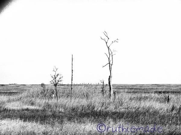 Dead trees (B&W)