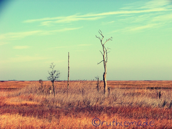 Dead Trees (Color)