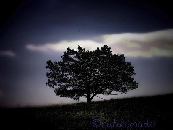 Gloomy Day Tree
