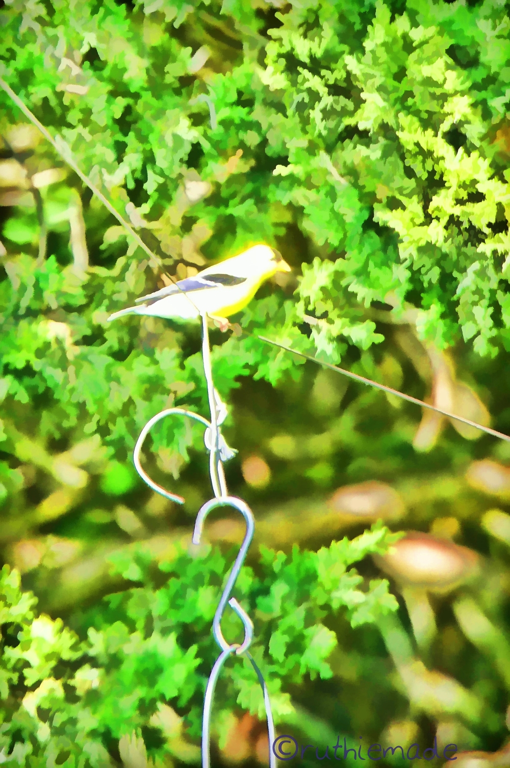 Painterly Goldfinch