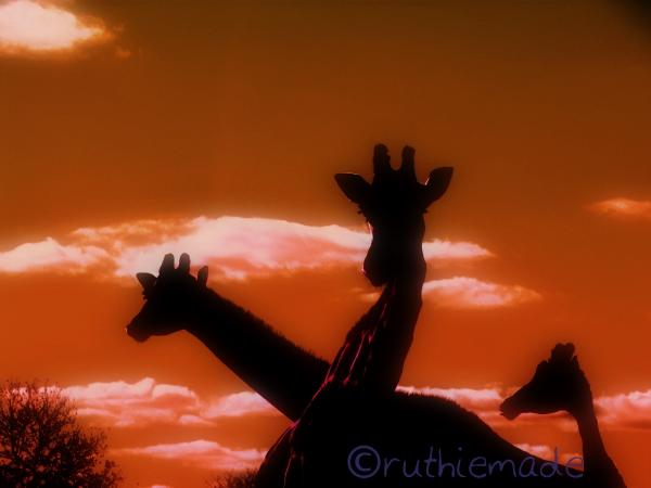 Giraffe SIlhouettes
