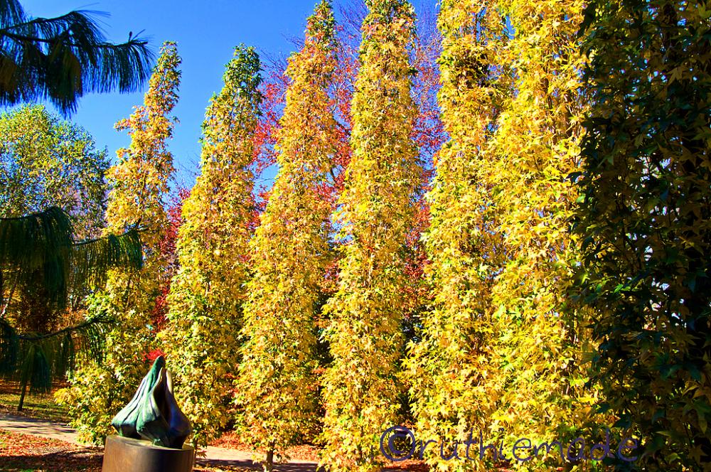 Line of Autumn Trees