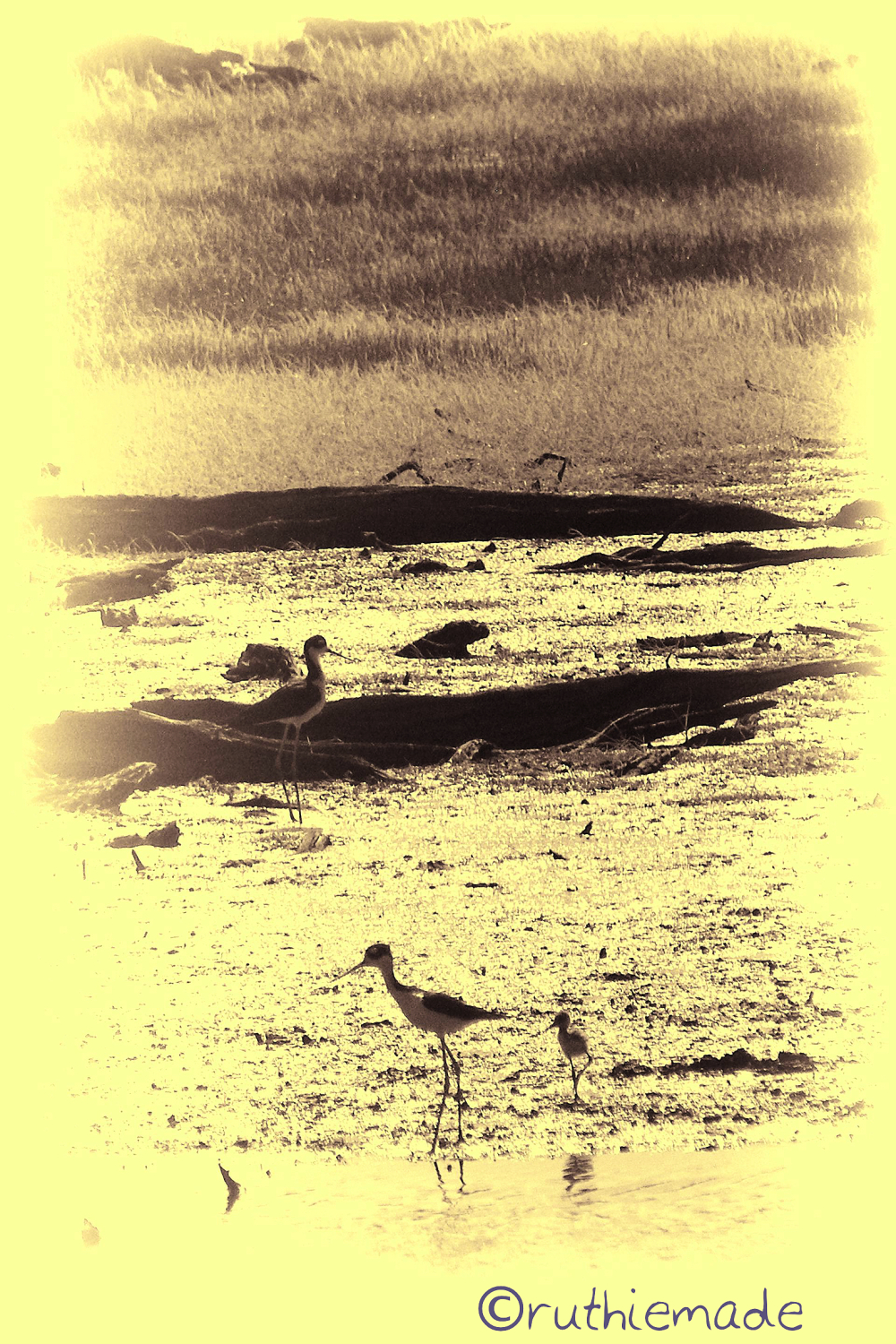 Seaside Birds