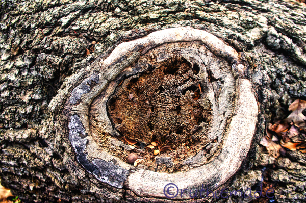 Eye on the tree