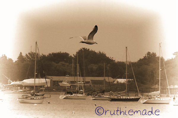 Old Time bird seascape