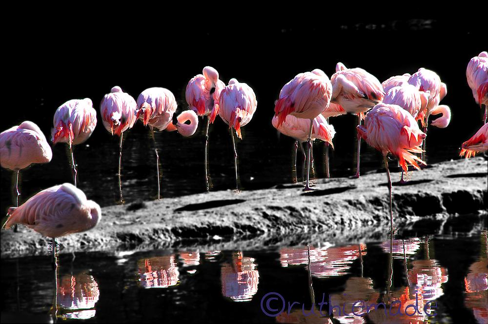 Line of Flamingos