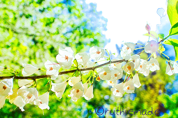 Branch of Blooms