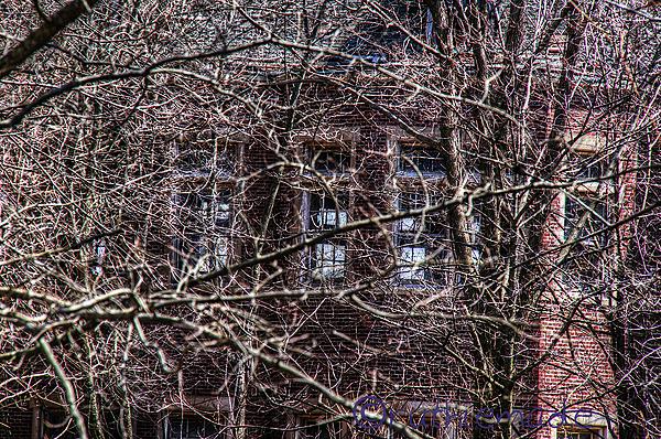 Overgrown Asylum