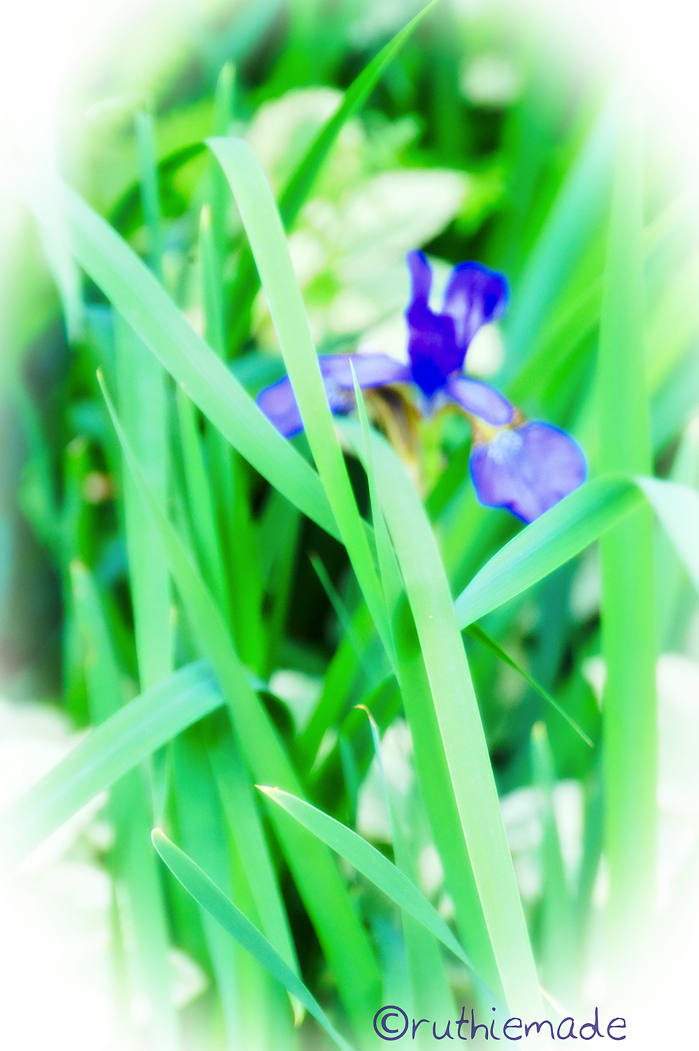 Iris Peeking