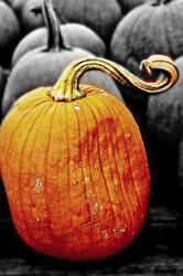 Show off Pumpkin