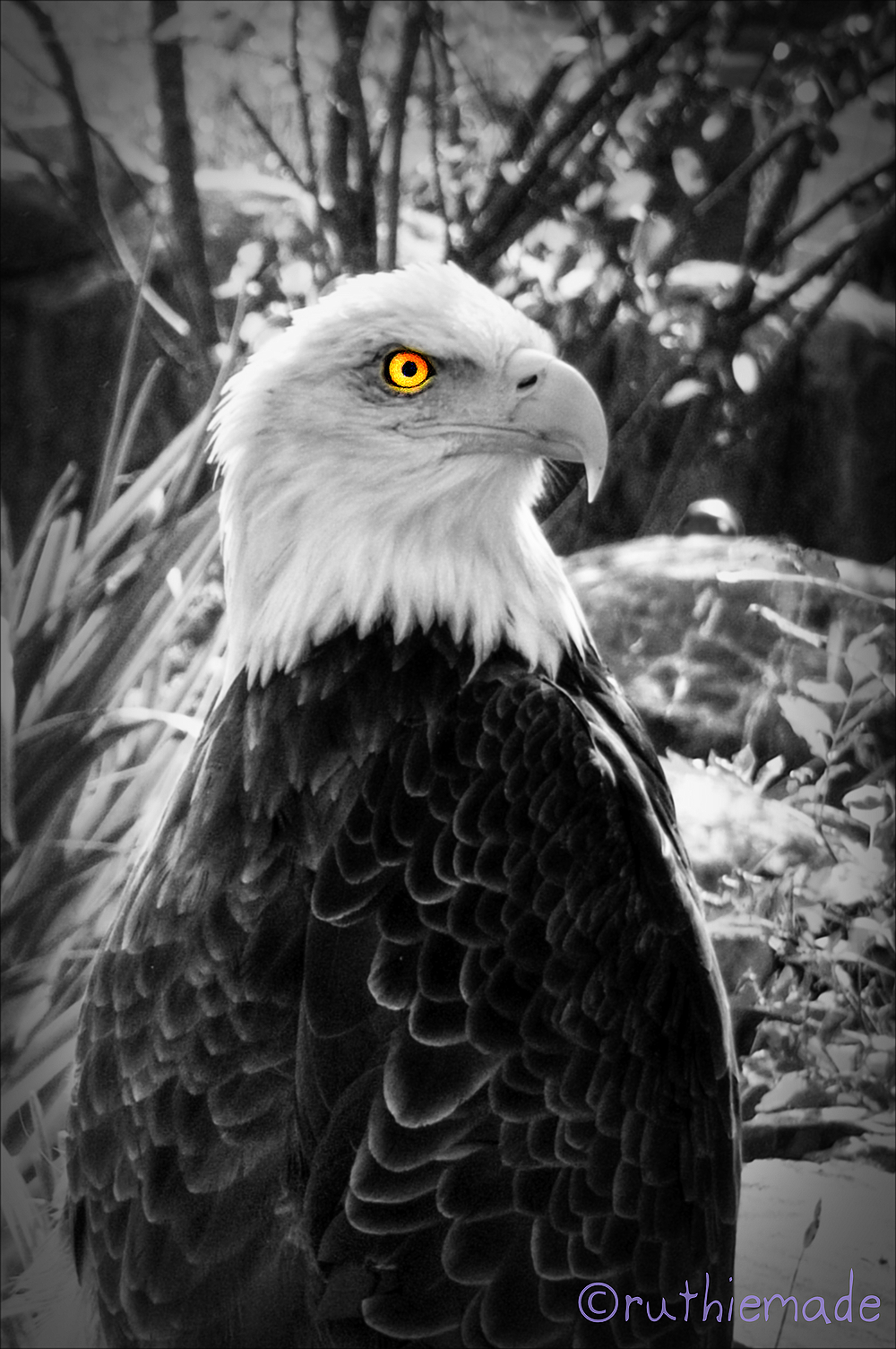 Fly Eagles FLy SUperBowl SUnday