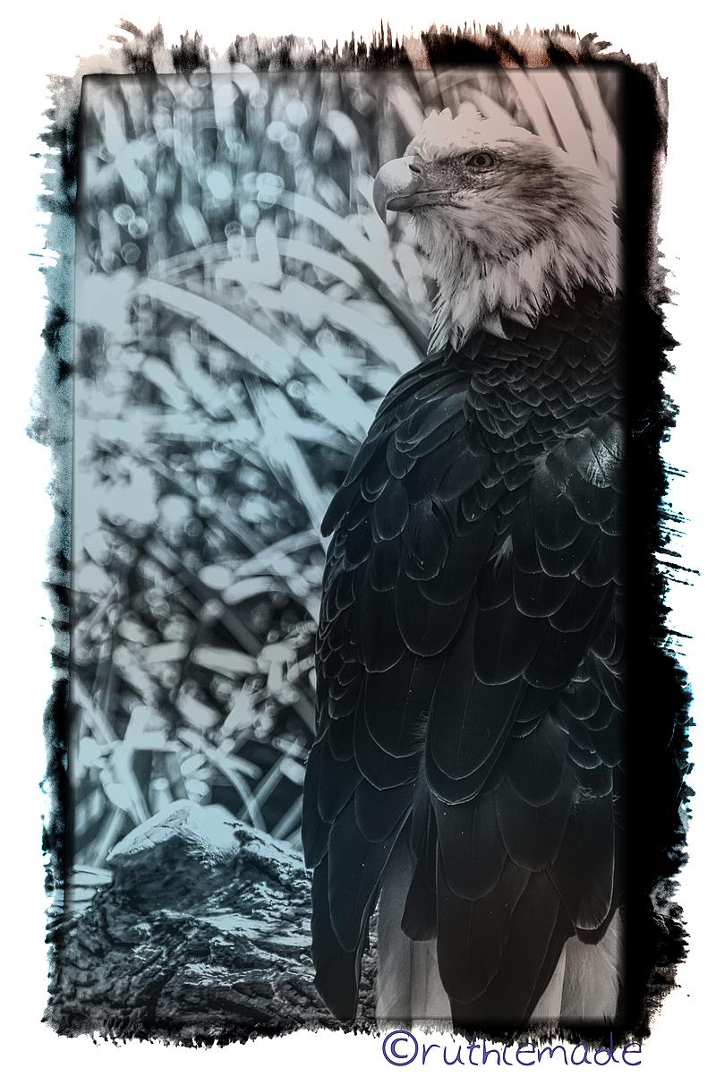 SUperbowl SUnday Fly Eagles FLy