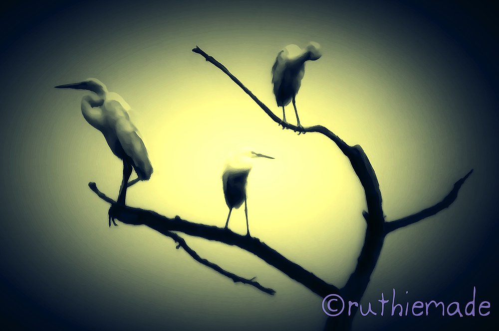 Egrets in Tree