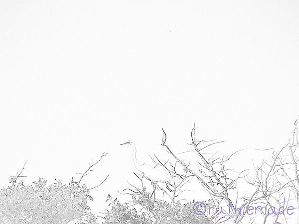 Sketchy egret