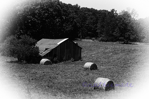 Life in B&W Hay and Barn