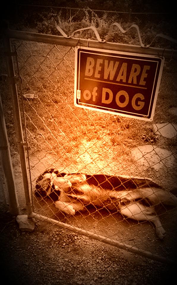 ST Beware of Dog