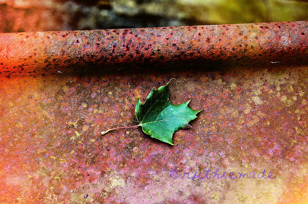 Leaf on Rust