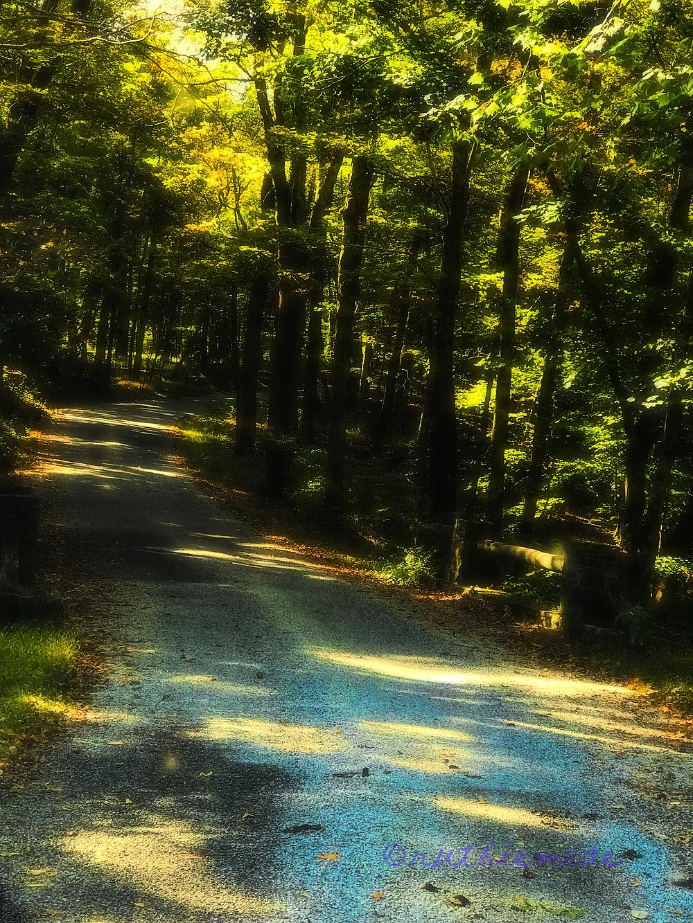 Sunlit Pathway