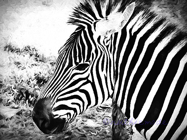 Life in B&W Zebra face