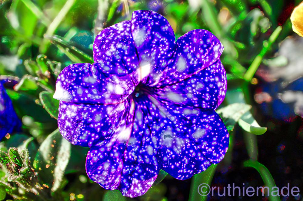 Confetti Flower