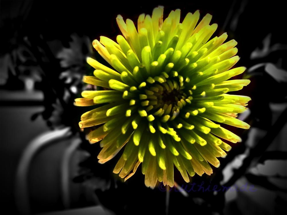 Spiky Bloom