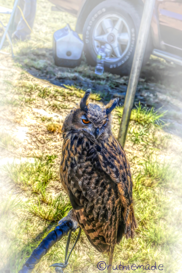 Owl in Fall