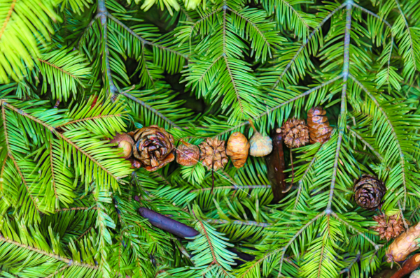 Outdoor Tree Decor 4