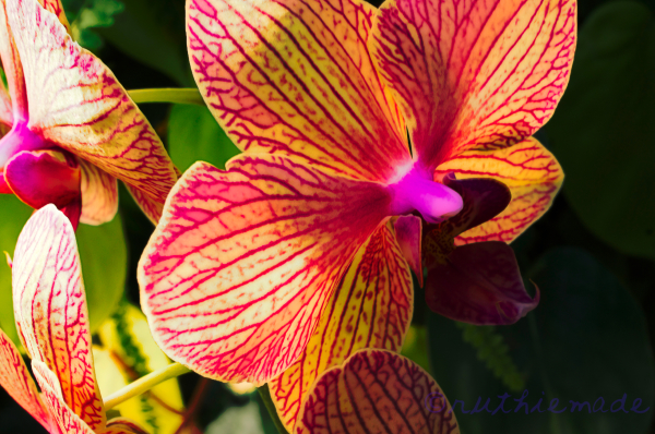 Orchid at Longwood gardens