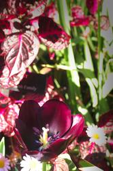 Flowers at Longwood
