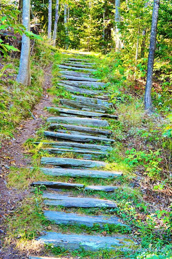 Stairway in Park
