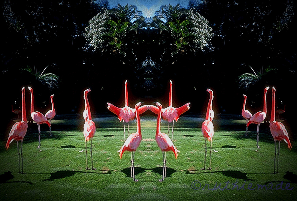 ST Flamingo Yoga