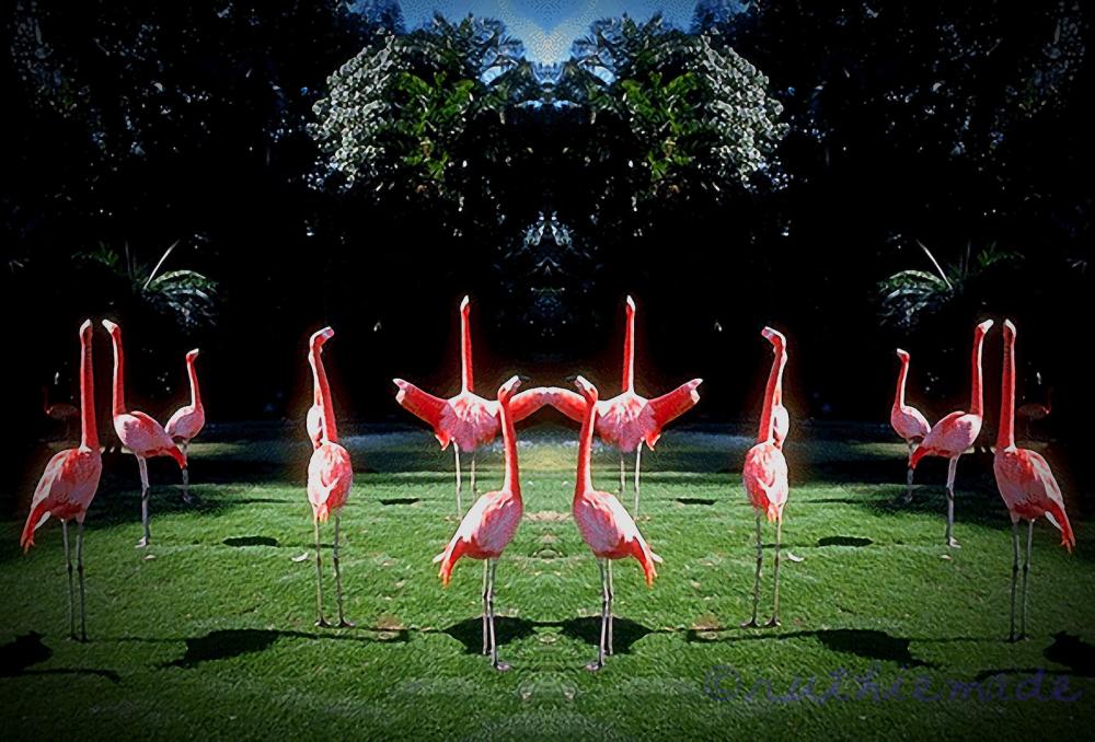 ST Flamingo Yoga